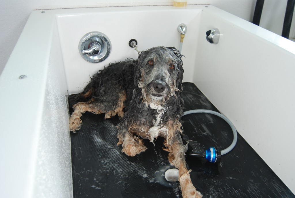 dog in self wash tub