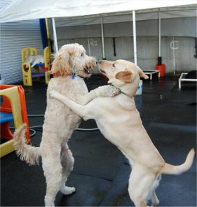 Social Dogs - BowWow Fun Towne