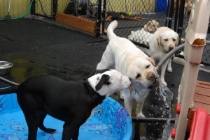 Dogs Drink Water - BowWow Fun Towne