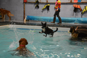 Dogs Play in Water - BowWow Fun Towne