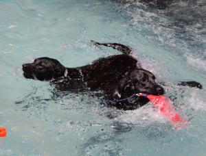 DogsSwimming-BowWowFunTowne
