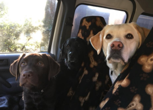 What To Give Dogs For Motion Sickness