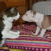 CatsAndDogs-BowWowFunTowne