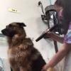 DogGrooming-BowWowFunTowne