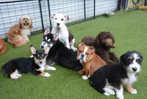 PuppySocializingClass-BowWowFunTowne