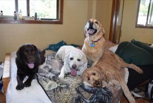 DogsSocializing-BowWowFunTowne
