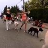 Dogs on Parade - BowWow Fun Towne