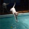 DogSwimming-BowWowFunTowne