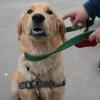 Dog Commands-BowWowFunTowne